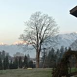 Innsbruck  130